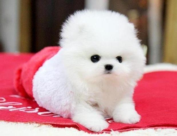 Animali in adozione roma cuccioli in regalo for Regalo offro gratis