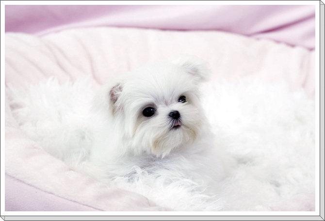 Animali in adozione roma cuccioli in regalo share the for Regalo annunci