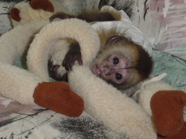 Vestiti da battesimo per bimbo scimmietta cappuccino - Compro vendo regalo la palma ...