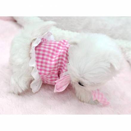 Fantastico cucciolo maltese per regalo annunci milano for Regalo annunci
